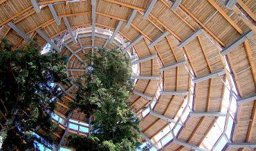 Tiptoe through the tree tops on the Bavarian Glass Road